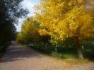 Парк осенью_1